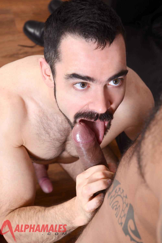 wolf porn Dolan gay
